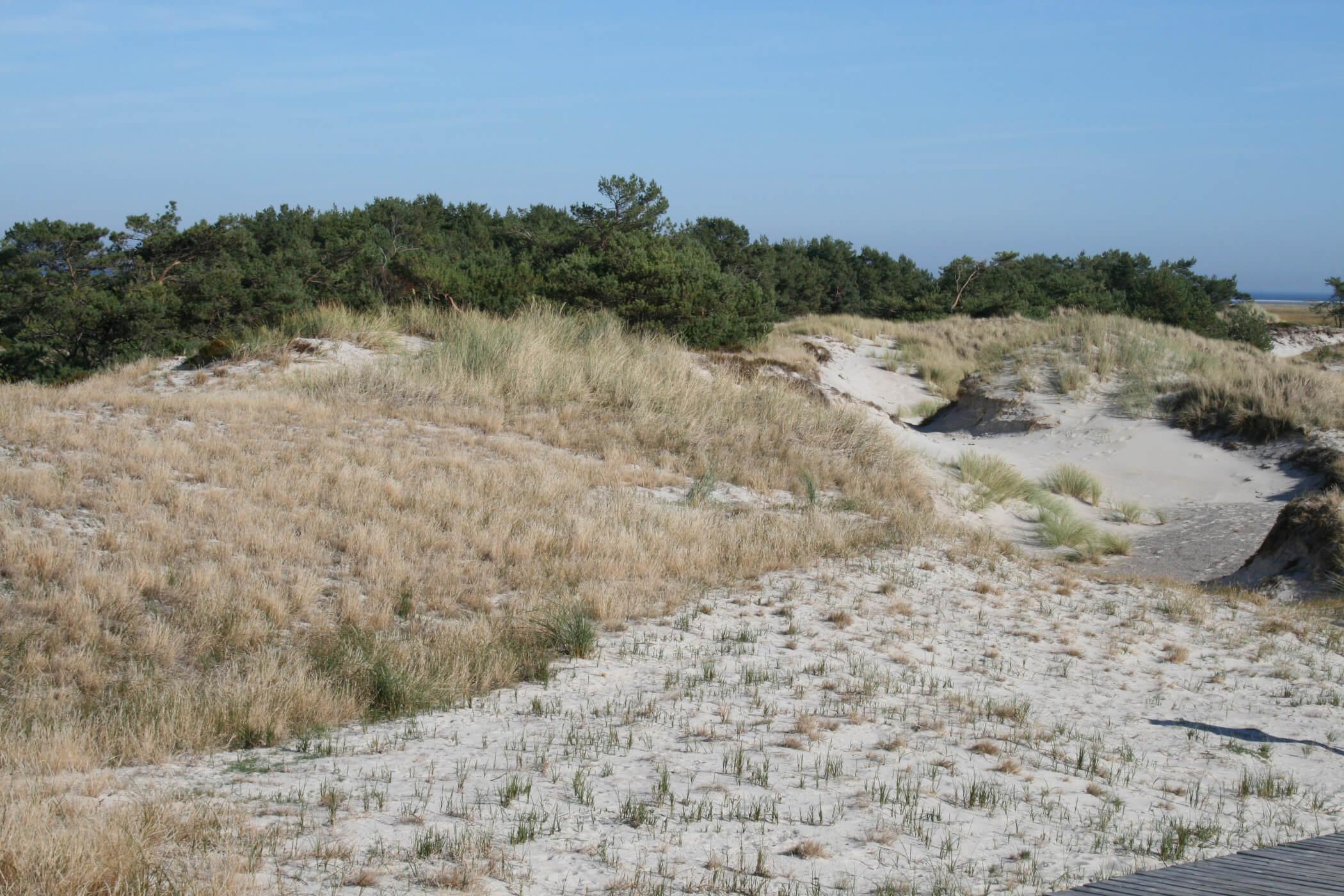 Boddenlandschaft am Nordstrand auf dem Fischland Darß