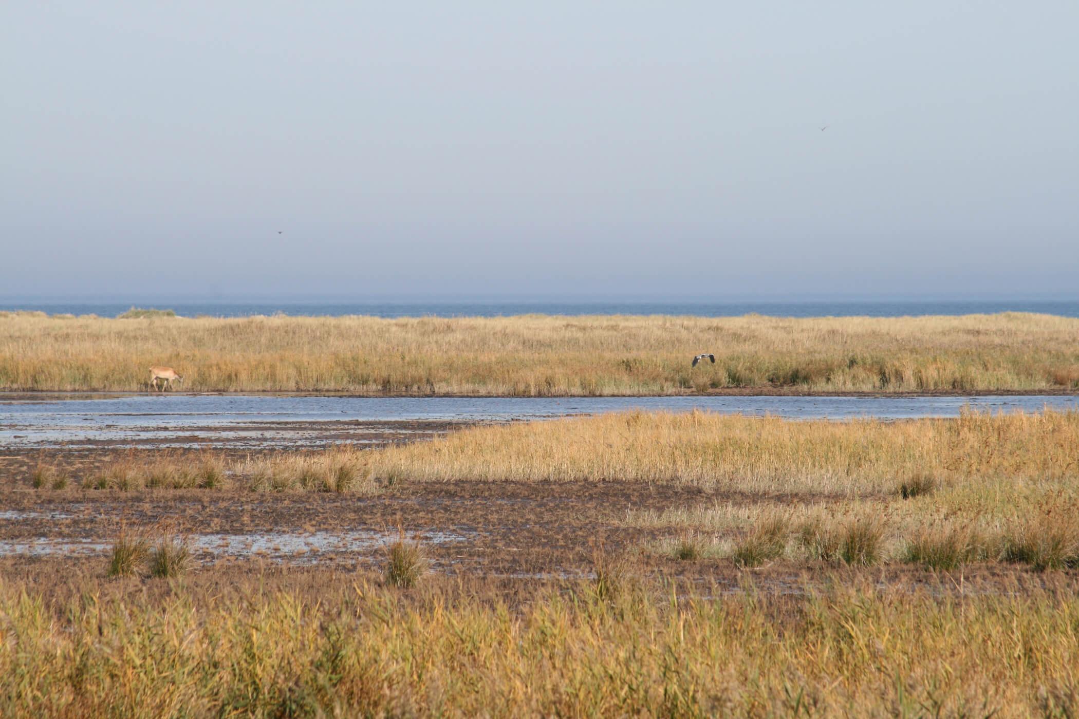 Fischland auf dem Darß typische Boddenlandschaft