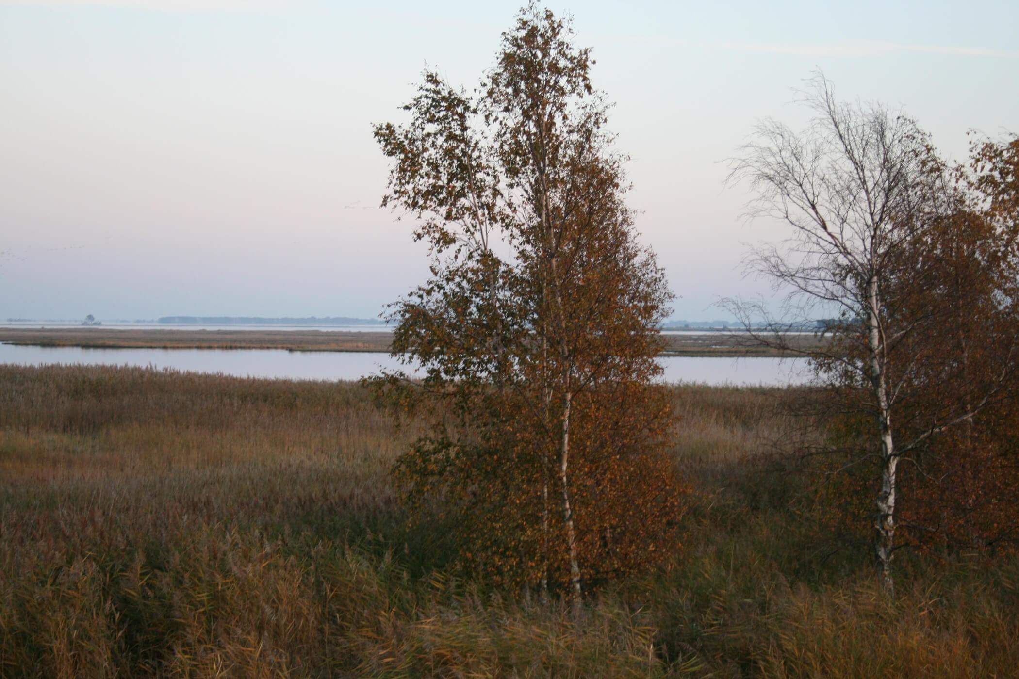 Frischkostwoche-Gruppe bei Kranichbeobachung auf dem Fischland Darß auf dem Boddendeich